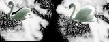 лебеди (160x62, 25Kb)