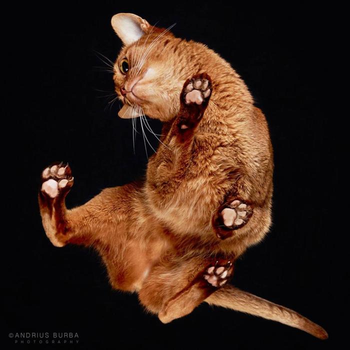 прикольные фото кошек 1 (700x700, 307Kb)