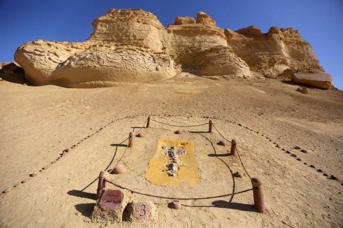 музей ископаемых животных в египете 1 (700x466, 284Kb)