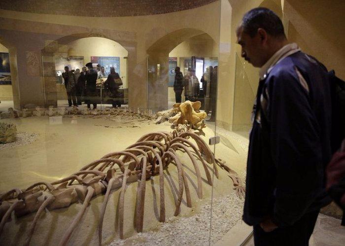 музей ископаемых животных в египете 5 (700x499, 249Kb)
