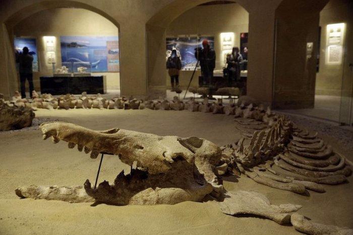 музей ископаемых животных в египете 7 (700x466, 243Kb)