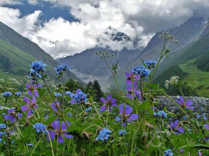 http://img1.liveinternet.ru/images/attach/c/11/127/812/127812345_Valleyofflowers1.jpg