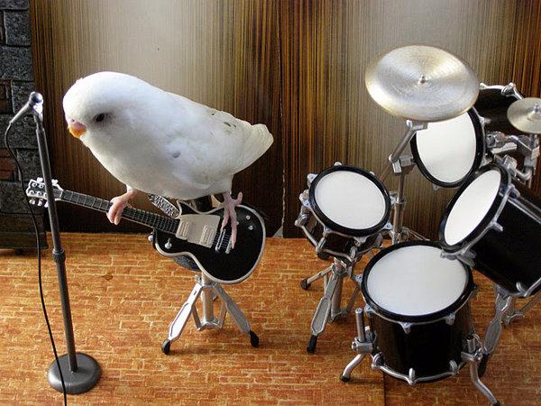 bird-guitar (600x450, 322Kb)