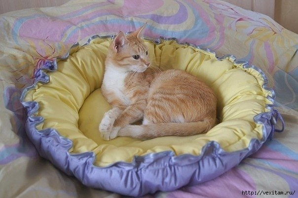 лежанка для домашней кошки (604x402, 144Kb)