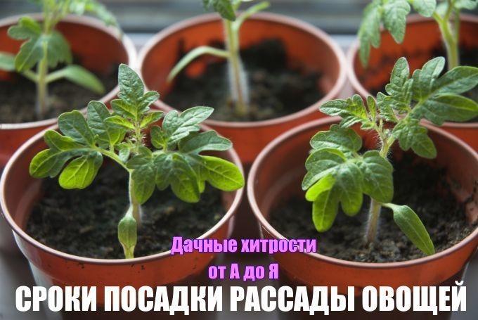 5993110_image (680x455, 68Kb)