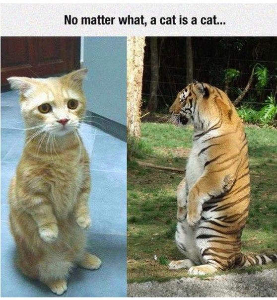 Кошка есть кошка (558x604, 86Kb)