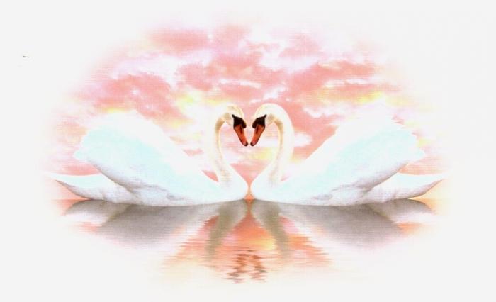 4710172_love_swans_2 (700x426, 132Kb)