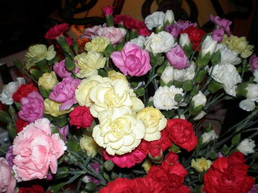 1_Carnation (520x390, 87Kb)