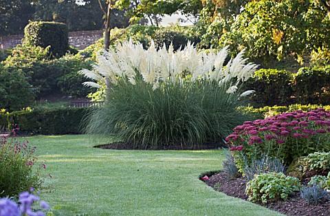 пампасная трава 10 (480x314, 270Kb)