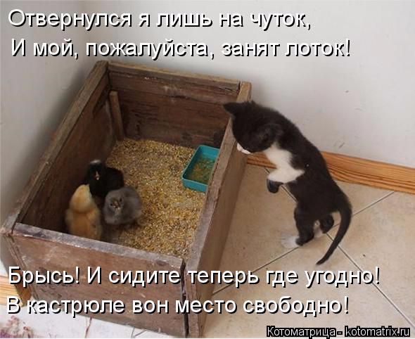 kotomatritsa_1Z (590x482, 221Kb)