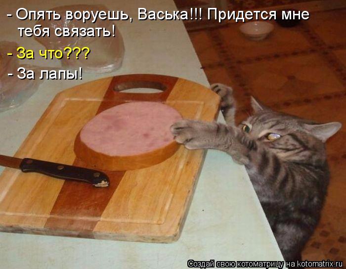 kotomatritsa_6 (700x544, 288Kb)