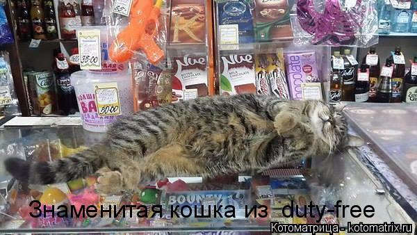 kotomatritsa_7 (600x338, 229Kb)