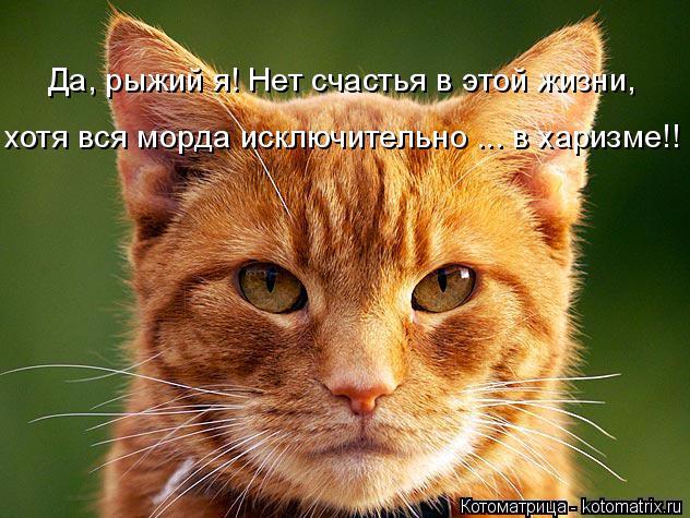 kotomatritsa_7O (1) (632x475, 354Kb)