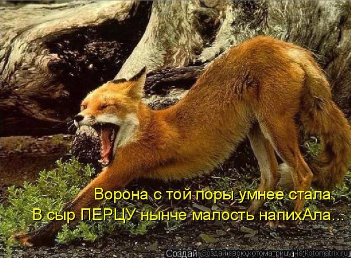 kotomatritsa_C (700x514, 488Kb)