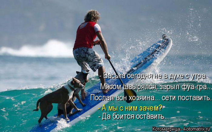 kotomatritsa_cv (700x436, 340Kb)