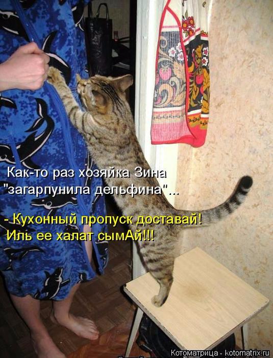 kotomatritsa_eD (535x700, 436Kb)