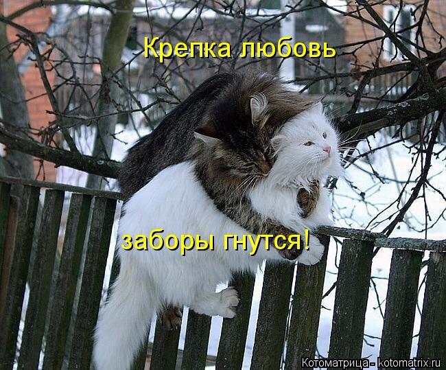 kotomatritsa_f (650x539, 370Kb)