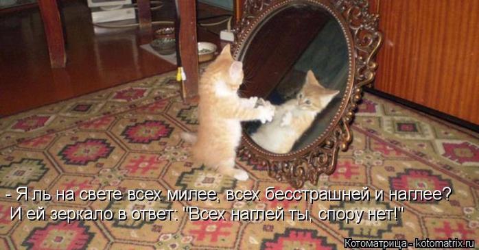 kotomatritsa_gA (700x365, 304Kb)