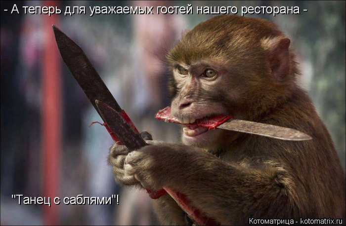 kotomatritsa_Gy (700x458, 295Kb)