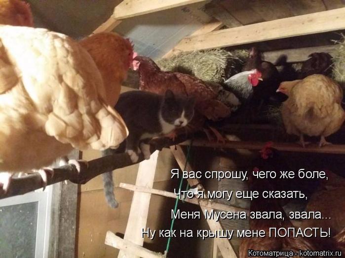kotomatritsa_JK (700x524, 353Kb)