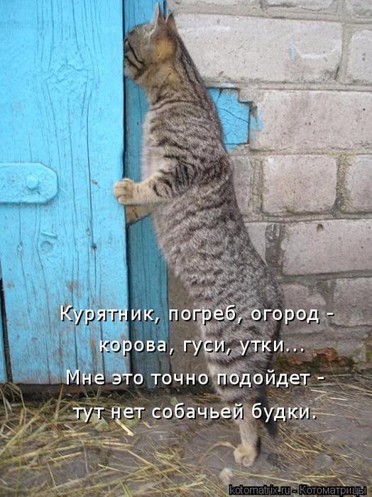 kotomatritsa_jt (524x700, 409Kb)