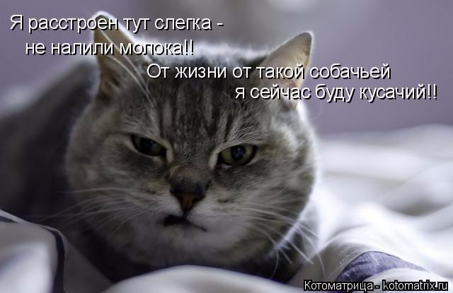 kotomatritsa_K (640x415, 144Kb)