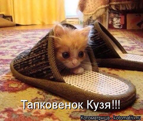 kotomatritsa_KE (483x411, 222Kb)