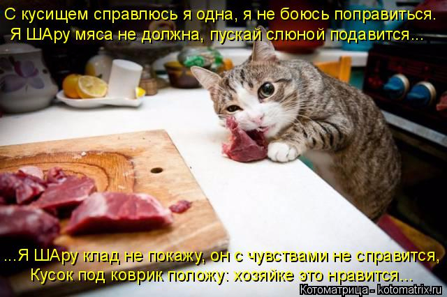 kotomatritsa_kw (1) (640x426, 297Kb)