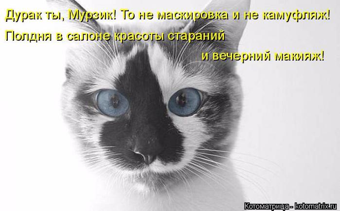 kotomatritsa_N (1) (700x435, 195Kb)