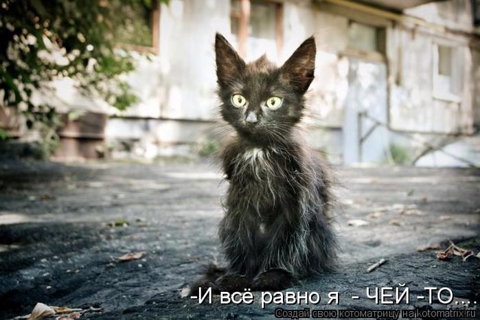kotomatritsa_Q (1) (700x466, 310Kb)