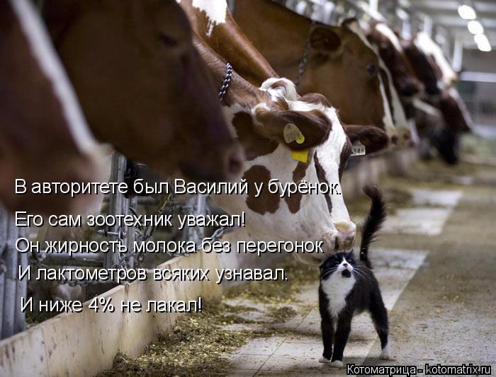 kotomatritsa_rr (700x533, 308Kb)