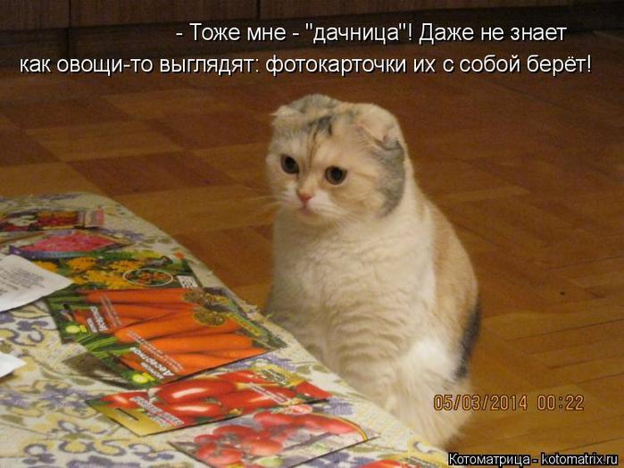 kotomatritsa_sm (700x524, 384Kb)