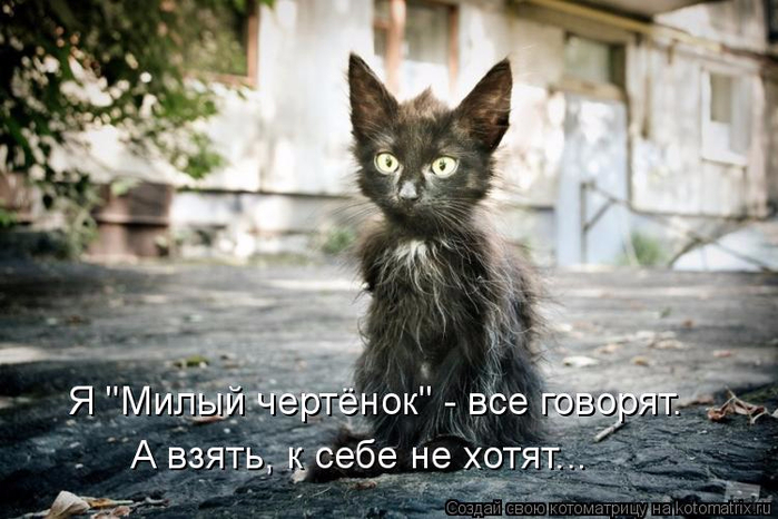 kotomatritsa_TR (700x466, 321Kb)