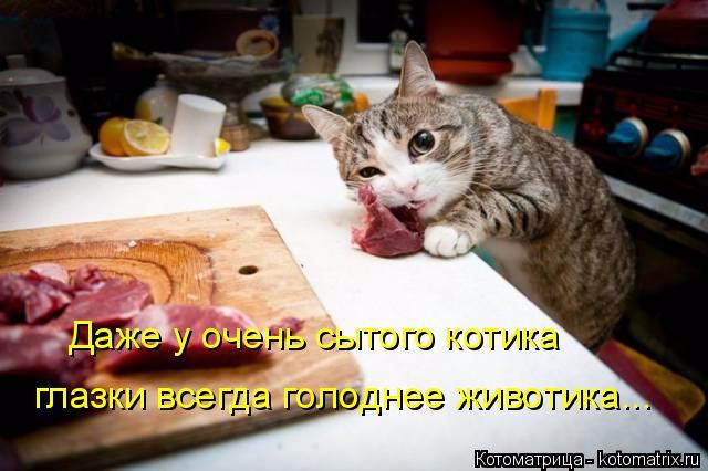 kotomatritsa_w (2) (640x426, 239Kb)