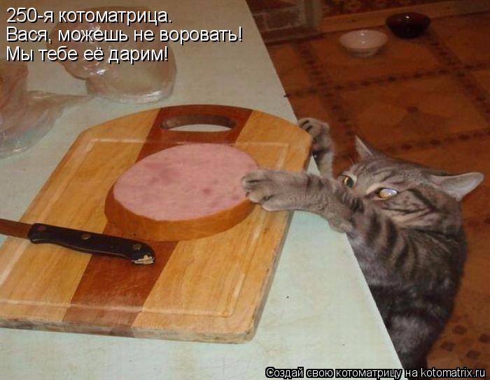 kotomatritsa_W (700x544, 274Kb)