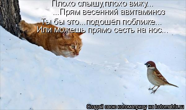 kotomatritsa_Y- (600x354, 158Kb)