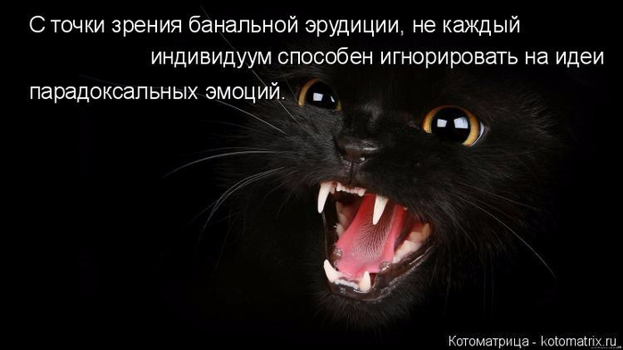 kotomatritsa_YH (700x392, 138Kb)