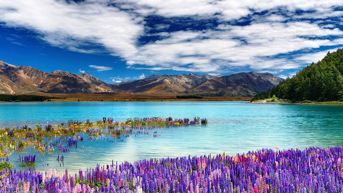 Lake-Tekapo-Amazing (700x394, 414Kb)