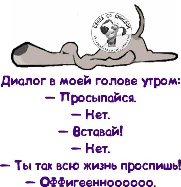 3821971_spat1390505047_frazochki18 (583x604, 58Kb)