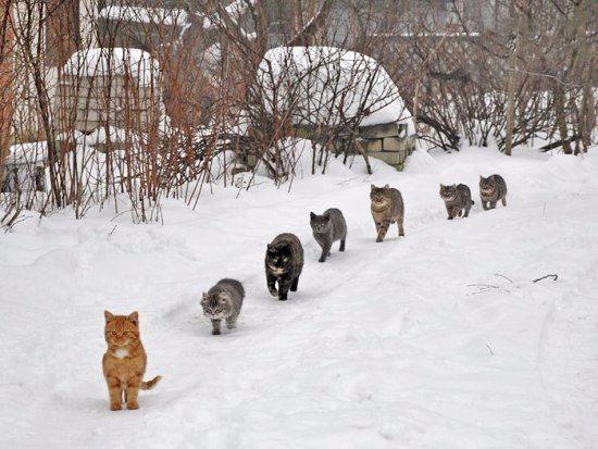 Мартовские коты1аа (550x413, 191Kb)