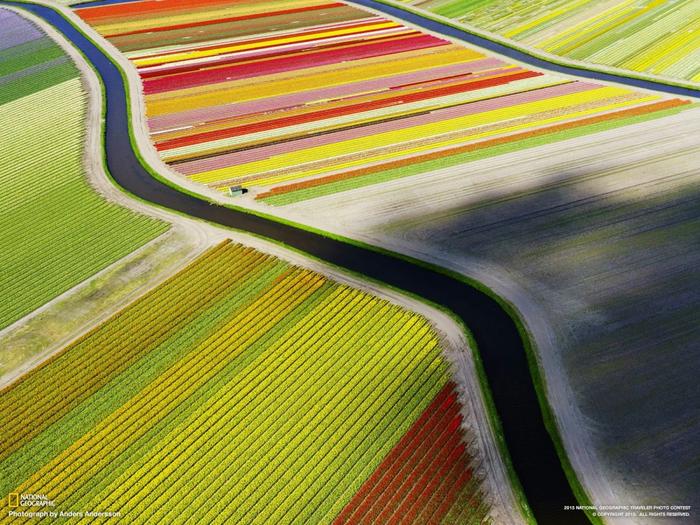 цветочные поля (700x525, 573Kb)