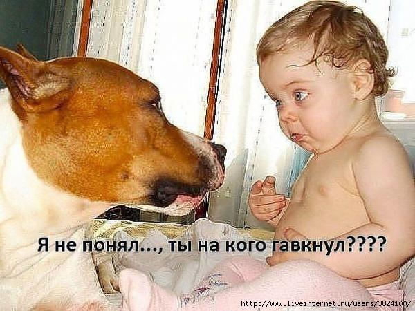 smeshnie_kartinki_1363012425110320131851 (600x450, 172Kb)