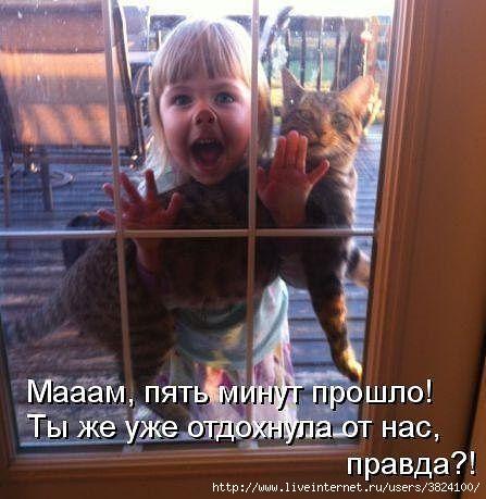 smeshnie_kartinki_1367058263270420131493 (447x459, 119Kb)
