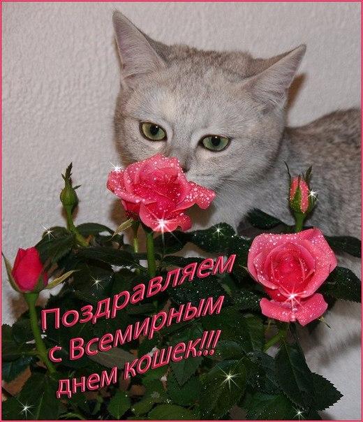 Картинки по запросу 1 марта день кошек