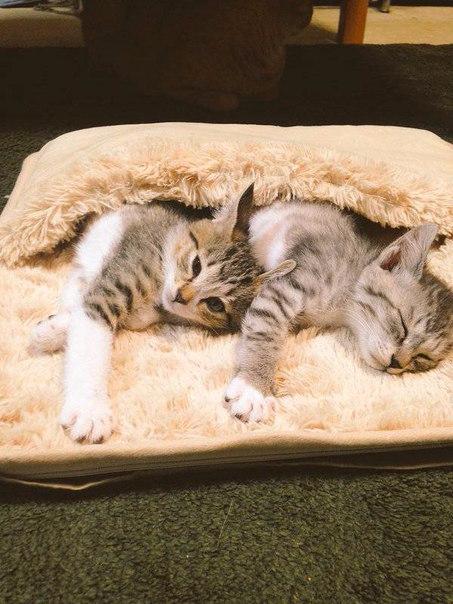 смешные кошки фото 3 (453x604, 254Kb)