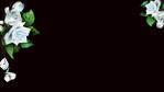Unbenannt-1 (435x455, 181Kb)