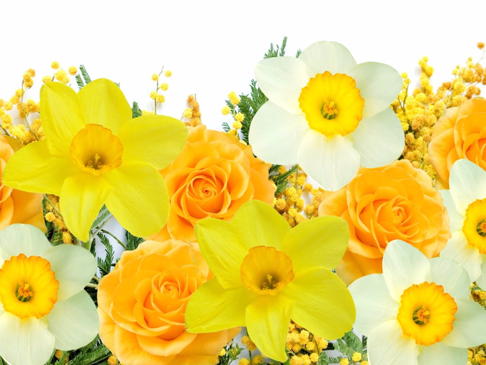1024x768_spring-flowers-mimosa-daffodils-yellow-white (700x525, 372Kb)