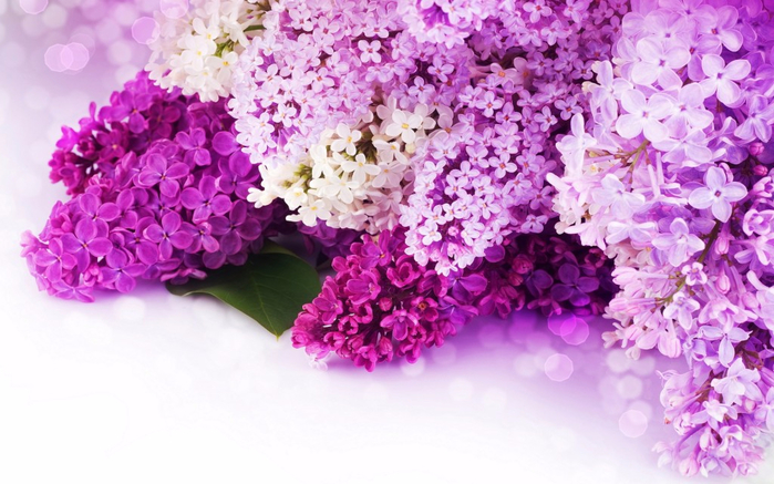 pink-and-purple-flower-background-1024x640 (700x437, 364Kb)