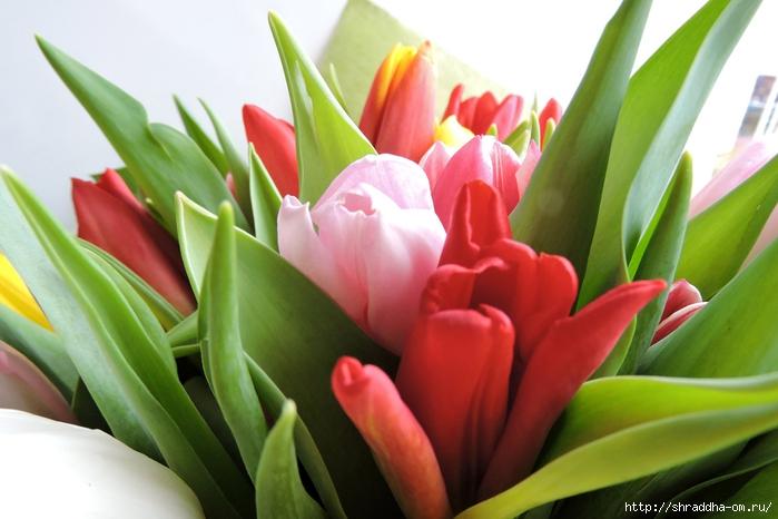 Тюльпаны ДР (10) (700x466, 218Kb)