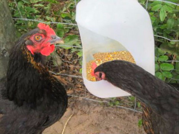 Кормушки для куриц своими руками из пластиковых бутылок